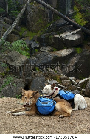 Back packing dogs, resting along trail near quiet Summer water fall.
