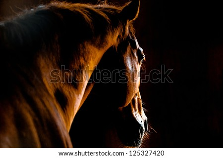 Back shot of a horse - stock photo