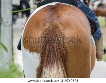 Back view of bottom horse. - stock photo