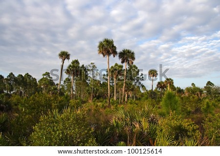Backcountry Access, Okaloacoochee Slough State Forest, South Florida - stock photo
