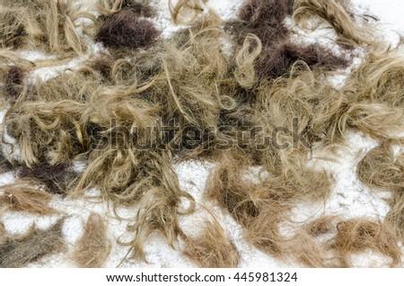 backdrop of human and animal hair - stock photo