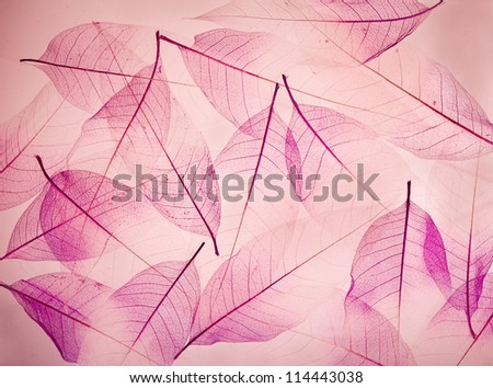 backdrop texture of colorful floral leaves bodhi tree - stock photo