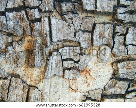 background and texture of bark