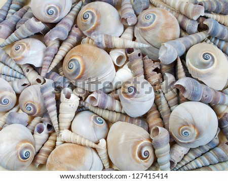 background and texture of sea shells - stock photo