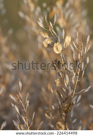 Background autumn grass texture with cluster of seed pods in foreground focus - stock photo