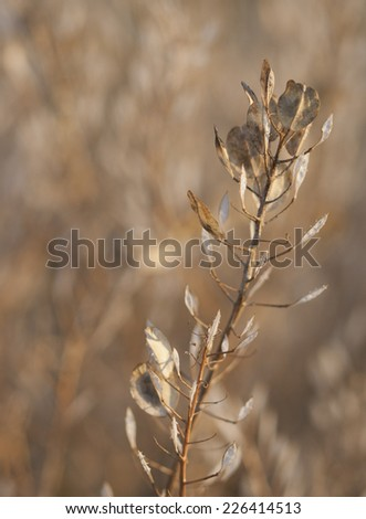 Background autumn grass texture with single stem of seed pods in foreground focus