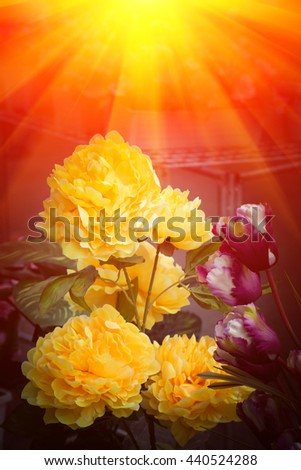 Background beautiful flowers and artificial light, colorful flowers.