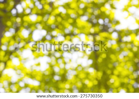 Background Bokeh from the sun under the shade of trees. - stock photo