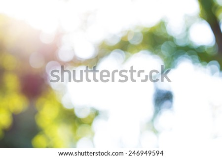 background bokeh trees plants blurry - stock photo