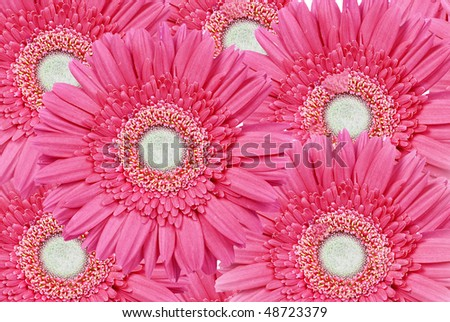Background close up of multiple pink daisy gerbera flowers - stock photo