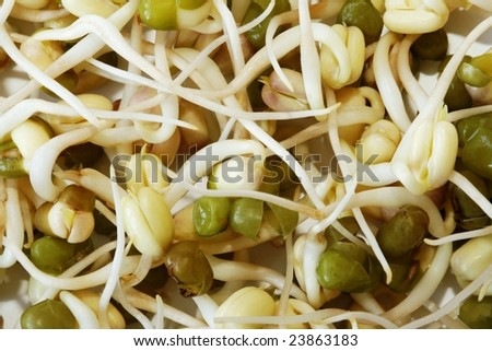 Background  created from tasty mung beans  sprouts  good in menopause