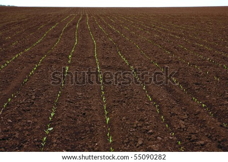 Background field in spring - ground and young sprout - stock photo