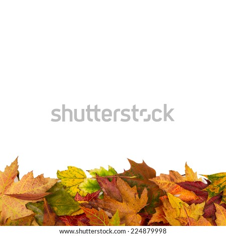 Background frame of isolated colorful autumn leaves at the bottom perfect for a party or wedding invite or card - stock photo