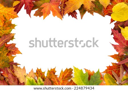 Background frame of isolated colorful autumn leaves perfect for a party or wedding invite or card - stock photo