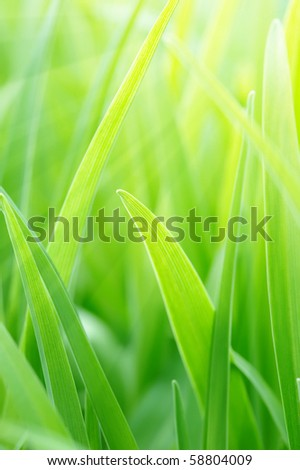 Background from a young green grass in a sunny day