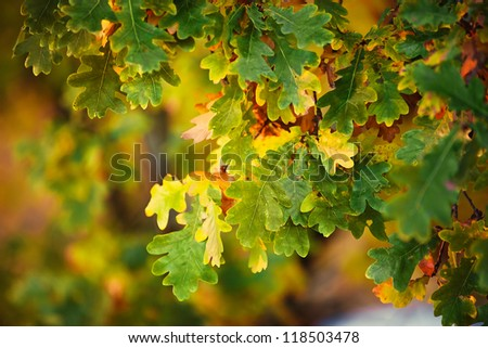 background from autumn green and orange leaves - stock photo