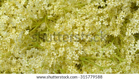 Background from blossom elderflower