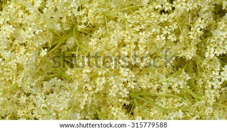 Background from blossom elderflower - stock photo