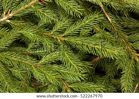 Background from green branches of fir tree. Fir-tree. Spruce.