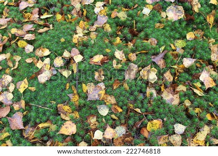 background from green moss and yellow leaves in the forest - stock photo