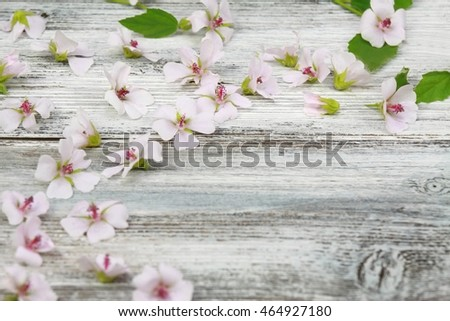 Background  from Marsh mallow, lat. Althaea officinalis, wooden board is decorated from marsh mallow flower heads