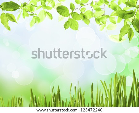 Background from meadow grass green on background blue sky
