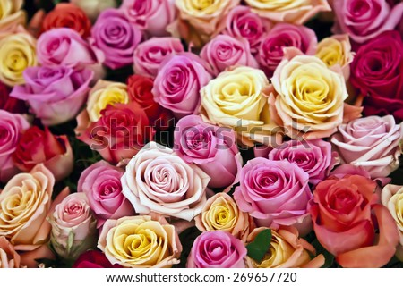 background from rose flowers - stock photo