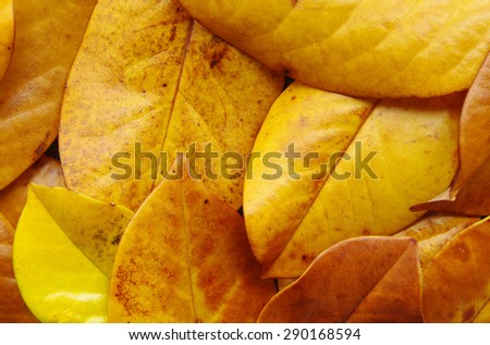 Background from yellow tropical leaves