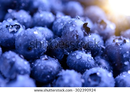 Background Full of Fresh Ripe Sweet Blueberries Covered with Water Drops and Lit by Sun. Summer Berries, Harvesting Concept - stock photo