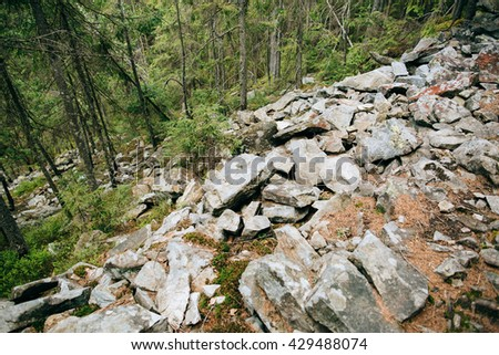 background Green Mountain Forest wood . Misty pine forest landscape. Travel, stone - stock photo