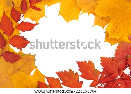 Background group autumn orange leaves on white background