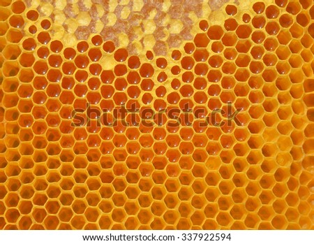 Background honeycomb with honey