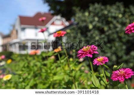 Background image of garden flowers in a small town, with a house in the background. - stock photo