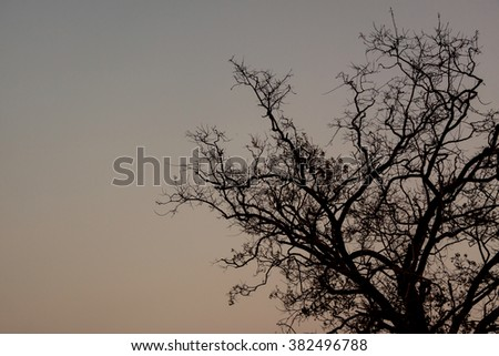 Background image of tree evening time