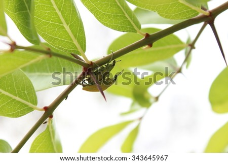 Background insect with leaf
