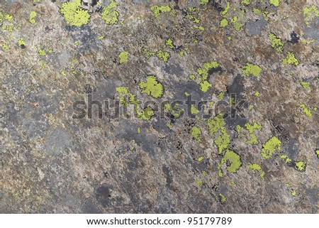 Background - lichen on the stone