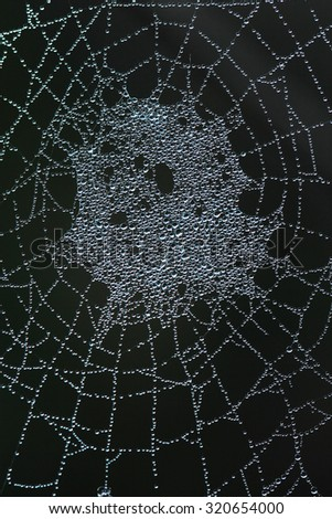 Background made by Spider Web Covered by Dew Drops  - stock photo