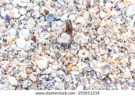 Background Made of a Pile of Seashells on the Beach Sand