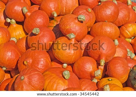 Background made of bright colorful pumpkins