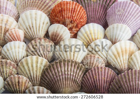 Background made of different types of seashells - stock photo