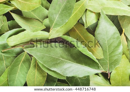 Background made of dried laurel leaves - stock photo