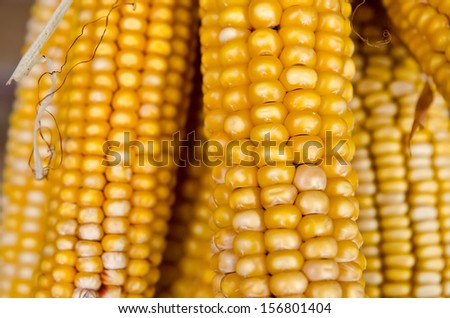 background made of yellow corn