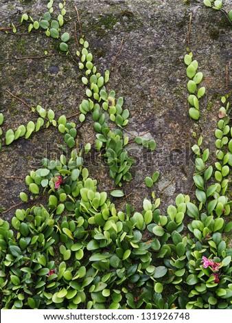 Background moss - stock photo