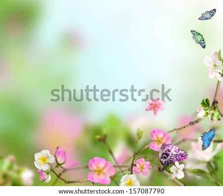 Background nature from fllowers with butterfly - stock photo
