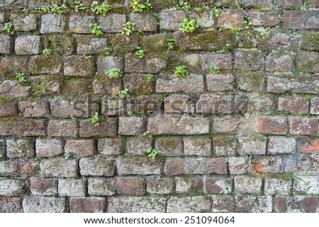 Background of a brick wall with moss and weeds - stock photo