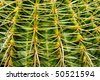 background of a closeup of a cactus - stock photo