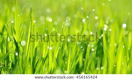 Background of a fresh green grass with water drops. Close-up - stock photo