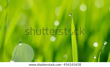 Background of a fresh green grass with water drops. Close-up