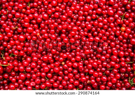 Background of a fresh red currant. Summer composition from the berries.