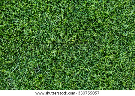 Background of a green grass. Texture green lawn